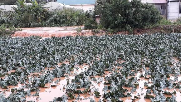 Đà Lạt mưa dữ dội kèm mưa đá, nhiều nơi ngập nặng ảnh 19