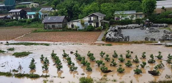 Đà Lạt mưa dữ dội kèm mưa đá, nhiều nơi ngập nặng ảnh 14