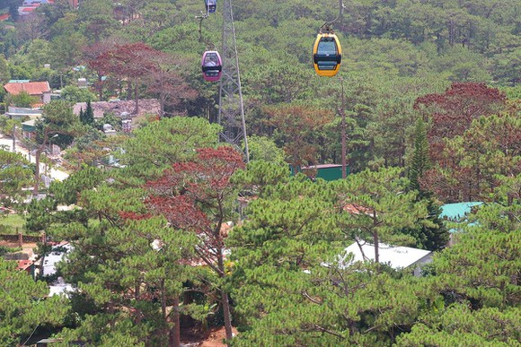 Giải toả nhiều công trình trái phép dưới tán rừng thông ở Đà Lạt ảnh 5