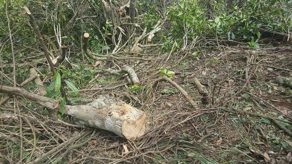 Bắt 11 đối tượng đem cưa máy phá rừng phòng hộ ở Đà Lạt ảnh 1