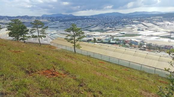 Phạt gần 190 triệu đồng 3 người cưa thông, lấn đất sản xuất ở Đà Lạt ảnh 2