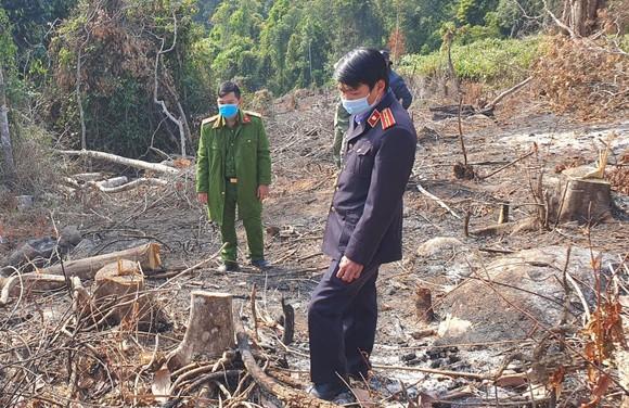 Phạt 2 đối tượng phá rừng phòng hộ tại Đà Lạt 200 triệu đồng  ảnh 1