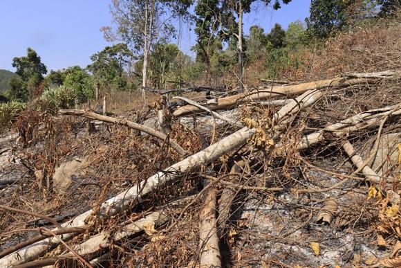Điều tra vụ phá 3.600m² rừng phòng hộ tại Đà Lạt ảnh 2