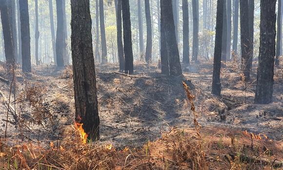 Ngăn chặn, dập tắt ngay các điểm cháy rừng ở Lâm Đồng ảnh 1
