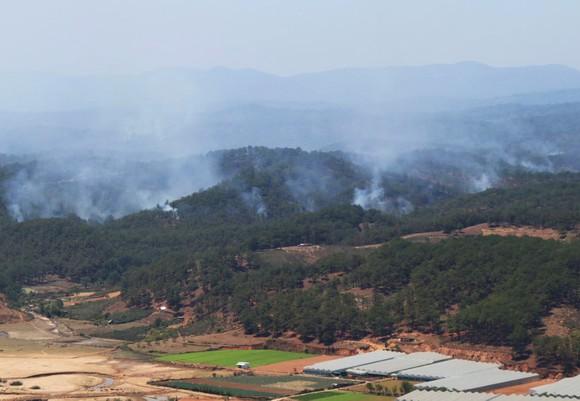 Ngăn chặn, dập tắt ngay các điểm cháy rừng ở Lâm Đồng ảnh 2