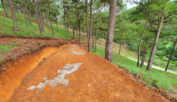 Ngang nhiên làm đường bê tông trong rừng thông Đà Lạt ảnh 4