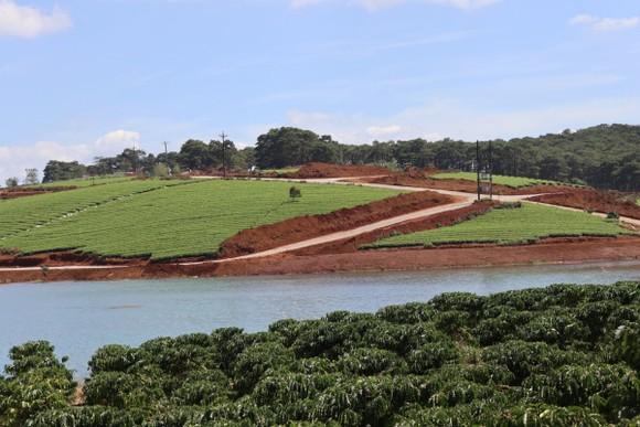 Lâm Đồng xử lý nhiều cán bộ liên quan tách thửa, quản lý đất đai ảnh 3
