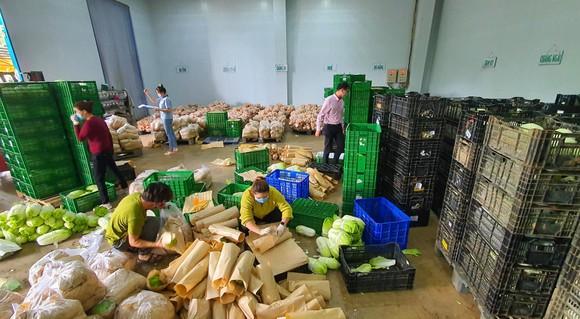 Mỗi ngày Lâm Đồng xuất 4.000 tấn rau, củ đi TPHCM ảnh 4