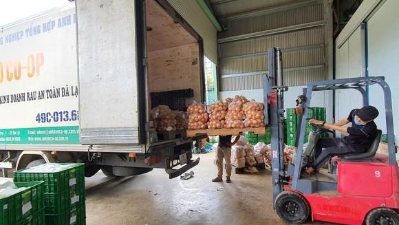Mỗi ngày Lâm Đồng xuất 4.000 tấn rau, củ đi TPHCM ảnh 5
