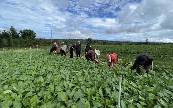 Thêm nhiều xe rau, củ từ Lâm Đồng hỗ trợ vùng dịch ở TPHCM và Phú Yên ảnh 4