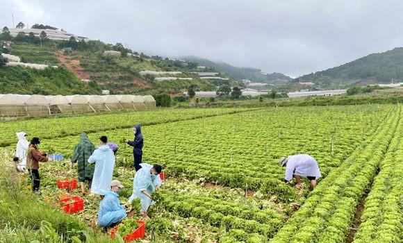 Thêm nhiều xe rau, củ từ Lâm Đồng hỗ trợ vùng dịch ở TPHCM và Phú Yên ảnh 1