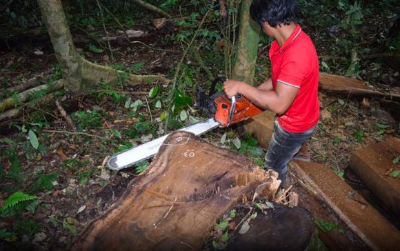 Khởi tố 14 đối tượng phá rừng ở Lâm Đồng ảnh 1