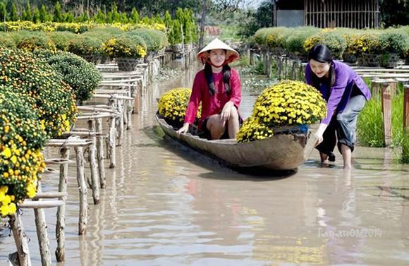 Người trồng hoa kiểng Tết ở Nam bộ rất lo sợ mưa trái mùa