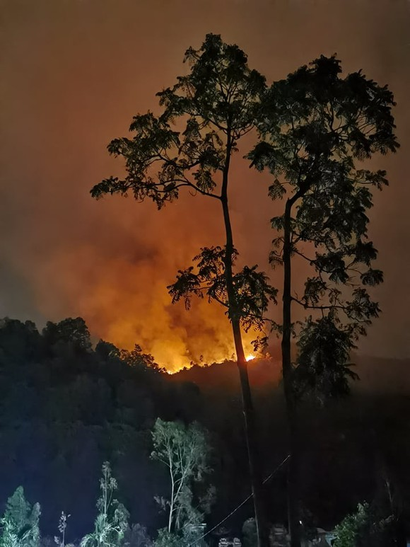 Điều tra nguyên nhân, xử lý đối tượng làm cháy rừng ảnh 1