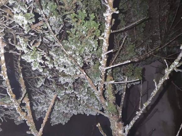 Hà Nội còn 8 độ C, Mẫu Sơn chìm trong băng tuyết ảnh 2
