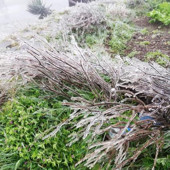 Hà Nội còn 8 độ C, Mẫu Sơn chìm trong băng tuyết ảnh 6