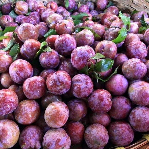 """Đưa trái cây ngon, đặc sản Sơn La lên """"sàn"""" ảnh 1"""