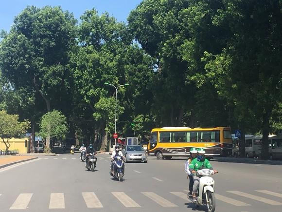 Trồng thêm nhiều cây xanh là giải pháp hữu hiệu, là hành động quan trọng để đảm bảo phát triển bền vững kinh tế - xã hội và môi trường của đất nước
