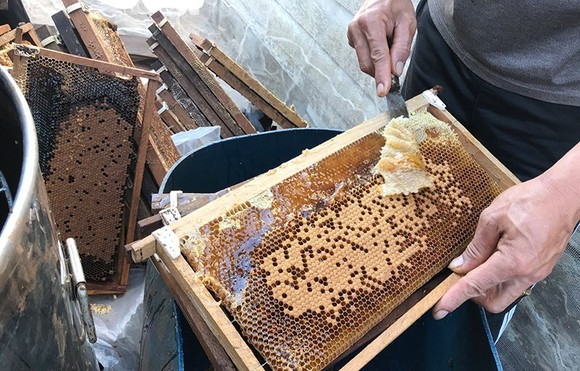 Mật ong Việt Nam bị Hoa Kỳ điều tra chống bán phá giá ảnh 1