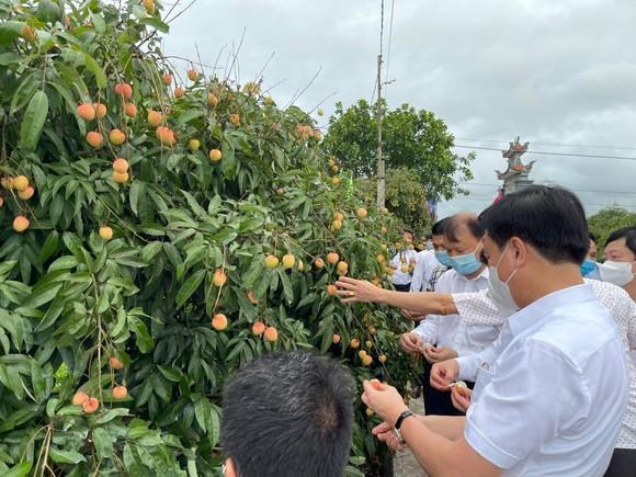 Vải thiều Việt Nam gây được tiếng vang sau 1 năm xâm nhập thị trường Nhật Bản ảnh 1