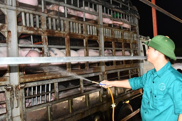 Việt Nam khẩn cấp dừng nhập heo của Thái Lan vì phát hiện dịch tả heo châu Phi