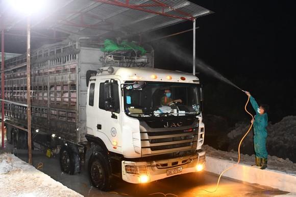 Việt Nam khẩn cấp dừng nhập heo của Thái Lan vì phát hiện dịch tả heo châu Phi ảnh 1