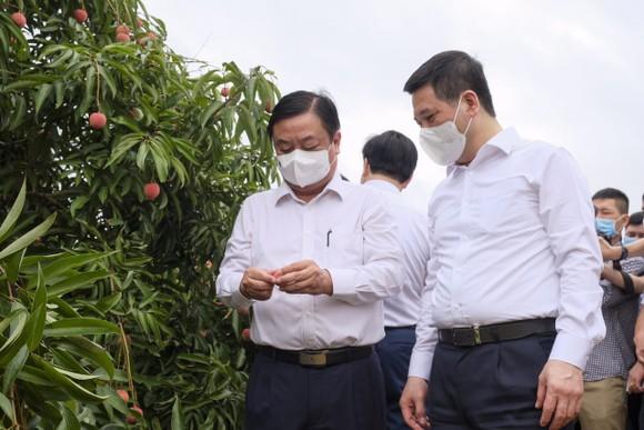 Vải thiều Việt Nam bán giá 105.000-120.000 đồng/kg tại Singapore  ảnh 2