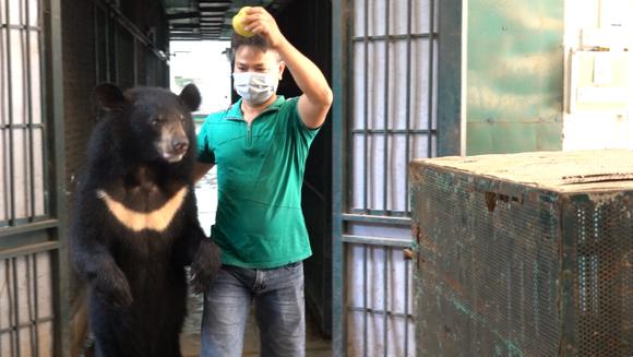Cứu hộ 4 con gấu cuối cùng tại Rạp xiếc Trung ương ảnh 1