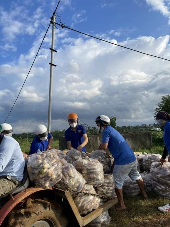Nhiều loại nông sản ở miền Nam sắp cung vượt cầu ảnh 2