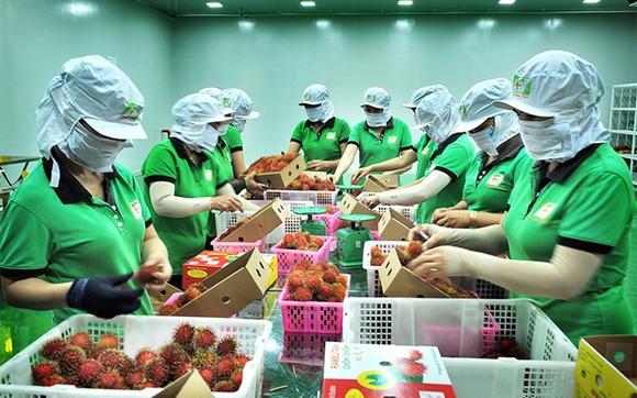 Thị trường Anh là 'mỏ vàng' của nông sản Việt Nam ảnh 1