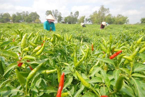 Nông sản Việt Nam xuất sang Trung Quốc gặp khó khăn ảnh 2