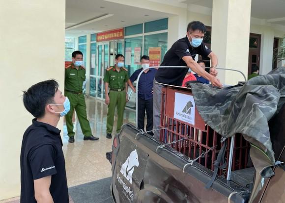 Chuẩn bị vận chuyển cá thể gấu ngựa từ Điện Biên về Vĩnh Phúc
