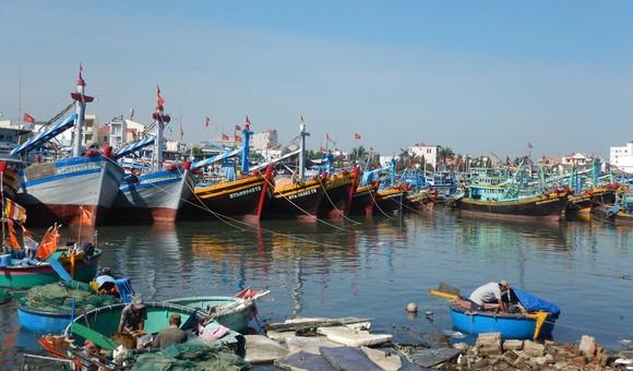 Bình Thuận chấn chỉnh hoạt động thuê tàu thuyền ra biển  ảnh 1