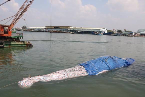 Bình Thuận: Cá voi nặng gần 10 tấn, dài 15m lụy ngoài khơi được đưa vào bờ ảnh 1