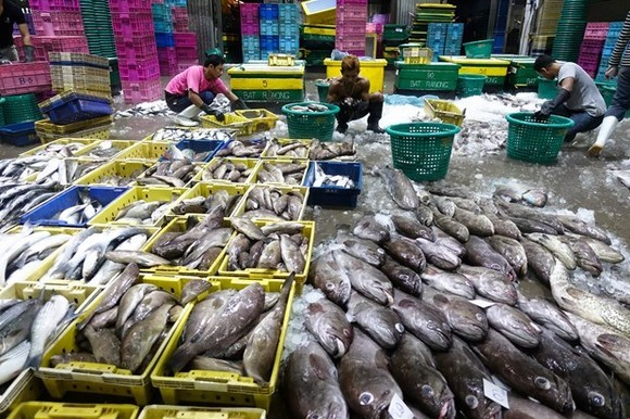 Duty-free treatment will be revoked for all Thailand's seafood exports to the US over labour issues. (Photo: Reuters)
