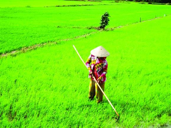 Nhanh chóng ổn định sản xuất nông nghiệp  ảnh 1
