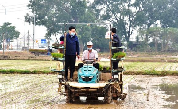 Lãnh đạo TP Hà Nội xuống ruộng đầu xuân cùng bà con nông dân ảnh 1