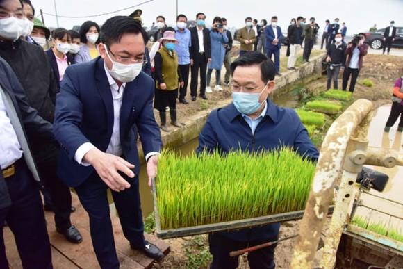Bí thư Thành ủy Hà Nội Vương Đình Huệ kiểm tra lúa giống của bà con nông dân huyện Thạch Thất trước khi gieo cấy