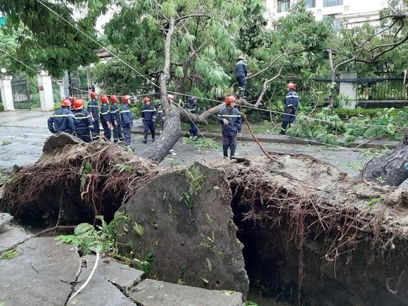 Thừa Thiên – Huế ra quân dọn dẹp cây xanh ngã đổ sau bão số 5 ảnh 1
