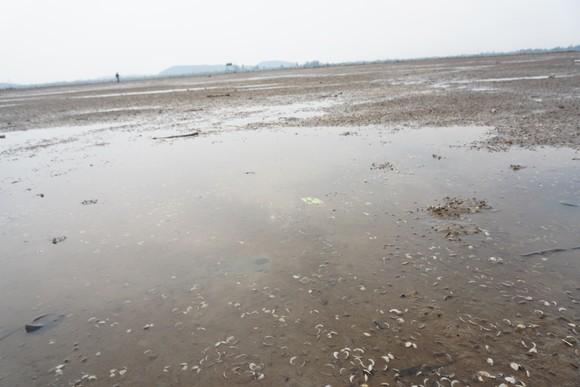 Nghêu nuôi chết sau mưa mưa lũ, người dân Hà Tĩnh bị thiệt hại nặng ảnh 11