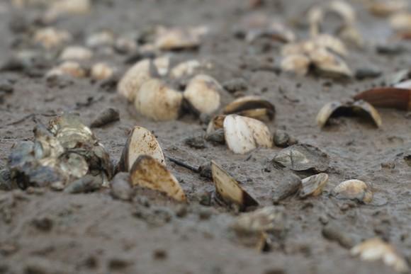 Nghêu nuôi chết sau mưa mưa lũ, người dân Hà Tĩnh bị thiệt hại nặng ảnh 9