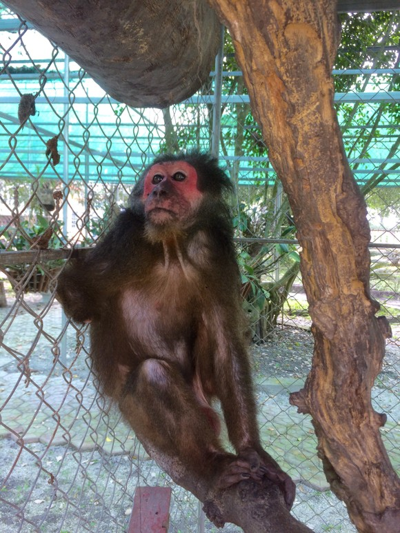 Ghi nhận 8 loài linh trưởng nguy cấp quý hiếm tại Vườn Quốc gia Vũ Quang ảnh 8