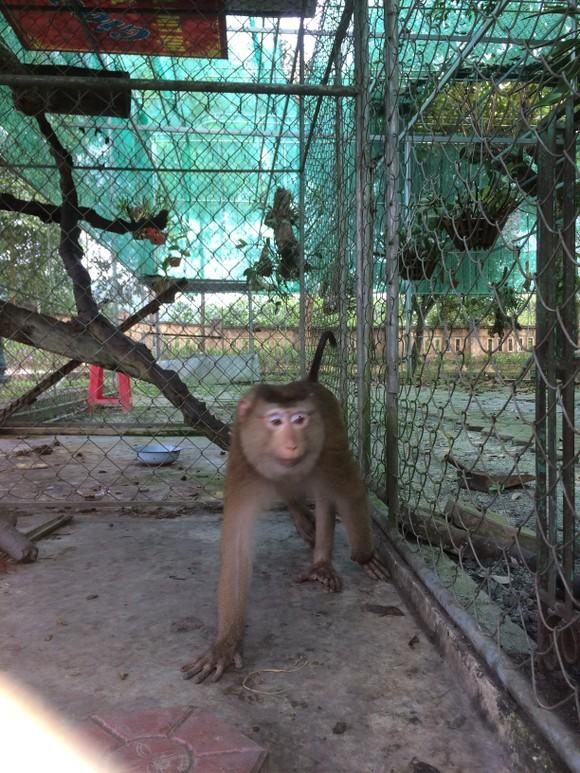 Ghi nhận 8 loài linh trưởng nguy cấp quý hiếm tại Vườn Quốc gia Vũ Quang ảnh 3