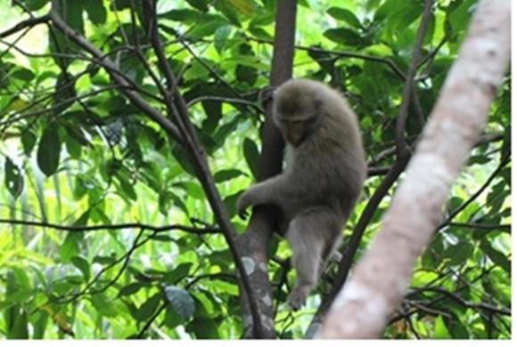 Ghi nhận 8 loài linh trưởng nguy cấp quý hiếm tại Vườn Quốc gia Vũ Quang ảnh 5