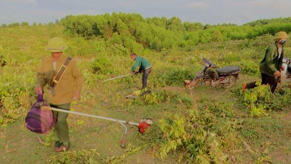 Người dân đưa phương tiện vào xẻ phát thực bì để trồng cây