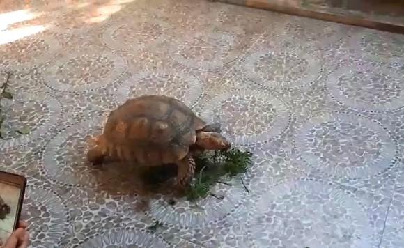 Thả cá thể rùa quý hiếm nặng gần 17kg về môi trường rừng tự nhiên ảnh 4