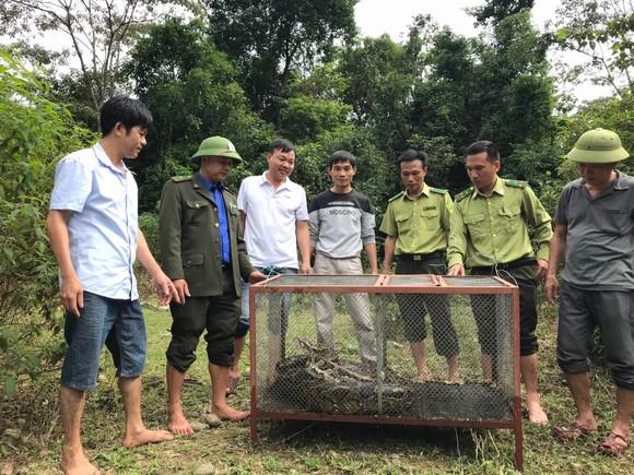 Thả trăn gấm quý hiếm nặng 35kg, dài gần 3m về tự nhiên ở Hà Tĩnh ảnh 1