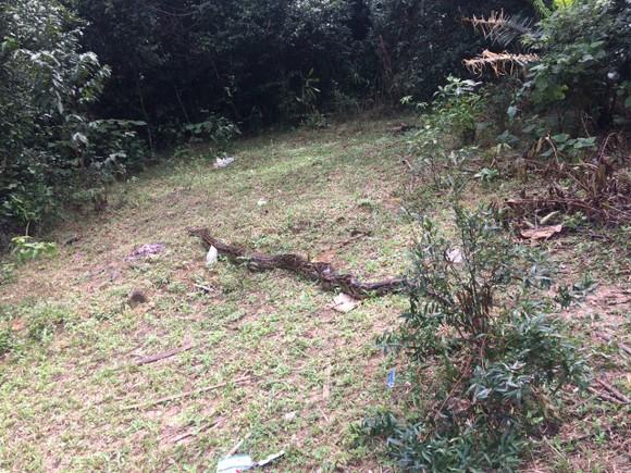 Thả trăn gấm quý hiếm nặng 35kg, dài gần 3m về tự nhiên ở Hà Tĩnh ảnh 6