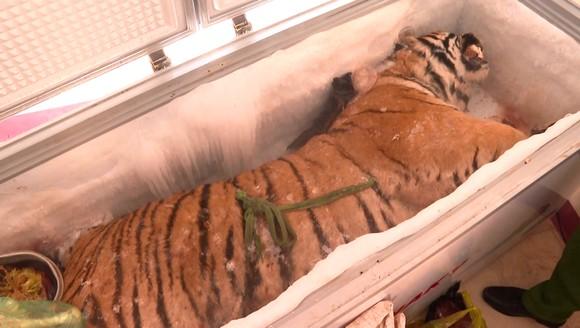 Hà Tĩnh: Phát hiện xác hổ đông lạnh nặng 160kg trong nhà dân ảnh 1