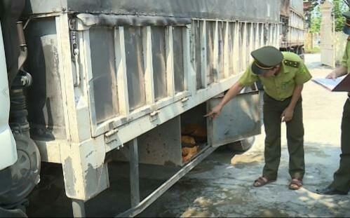 Phát hiện vụ vận chuyển trái phép hơn 120kg động vật hoang dã ảnh 1